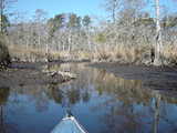 Oakum Creek during a low water condition (Kayak Virginia Beach Images © Paul Perusse)
