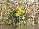 Fall foliage (Kayak Virginia Beach Images © Paul Perusse)