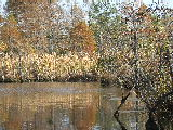 Fall colors on the Northwest river (Kayak Virginia Beach Images © Paul Perusse)