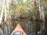 Smiths Creek, Chesapeake Virginia (Kayak Virginia Beach Images © Paul Perusse)