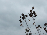 Spent seed pods (Kayak Virginia Beach Images © Paul Perusse)