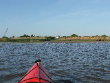 As close as I could get the kayak to the shore (Kayak Virginia Beach Images © Paul Perusse)