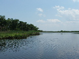 Western shoreline of Long Island in Back Bay NWR (Kayak Virginia Beach Images © Paul Perusse)