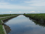 Main canal from launch ramp at Mackay Island (Kayak Virginia Beach Images © Paul Perusse)