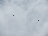 Eagles circling above (Kayak Virginia Beach Images © Paul Perusse)