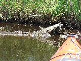 Wreckage in Mackay Island NWR (Kayak Virginia Beach Images © Paul Perusse)