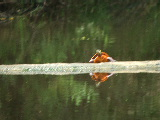turtle sunning on a log (Kayak Virginia Beach Images © Paul Perusse)