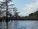 Cypress Trees (Kayak Virginia Beach Images © Paul Perusse)