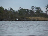 Bald Eagle North Landing River Catching a Fish (Kayak Virginia Beach Images © Paul Perusse)