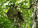 Hornets Nest on Smiths Creek (Kayak Virginia Beach Images © Paul Perusse)